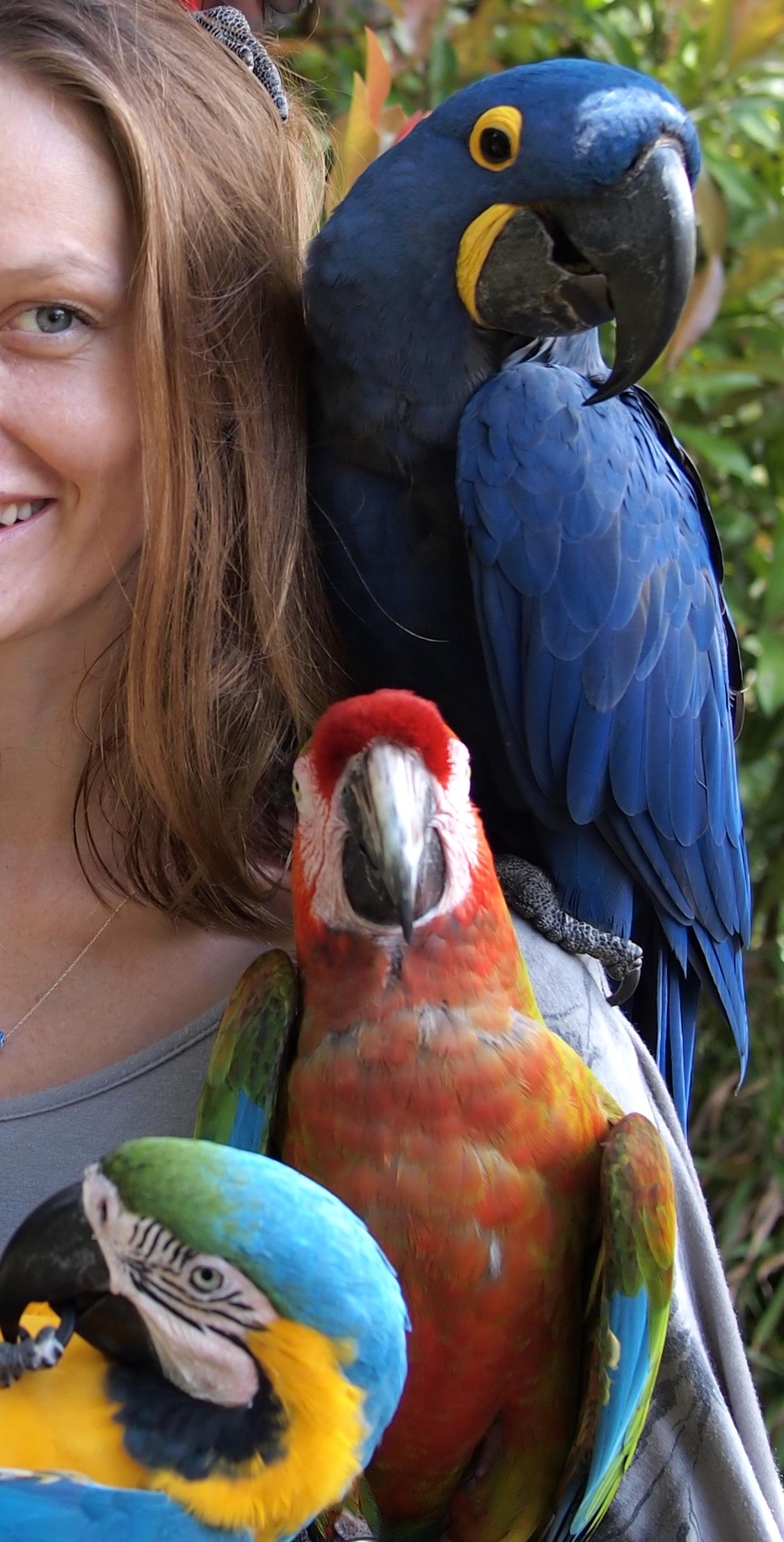 Kim jest Papuga?