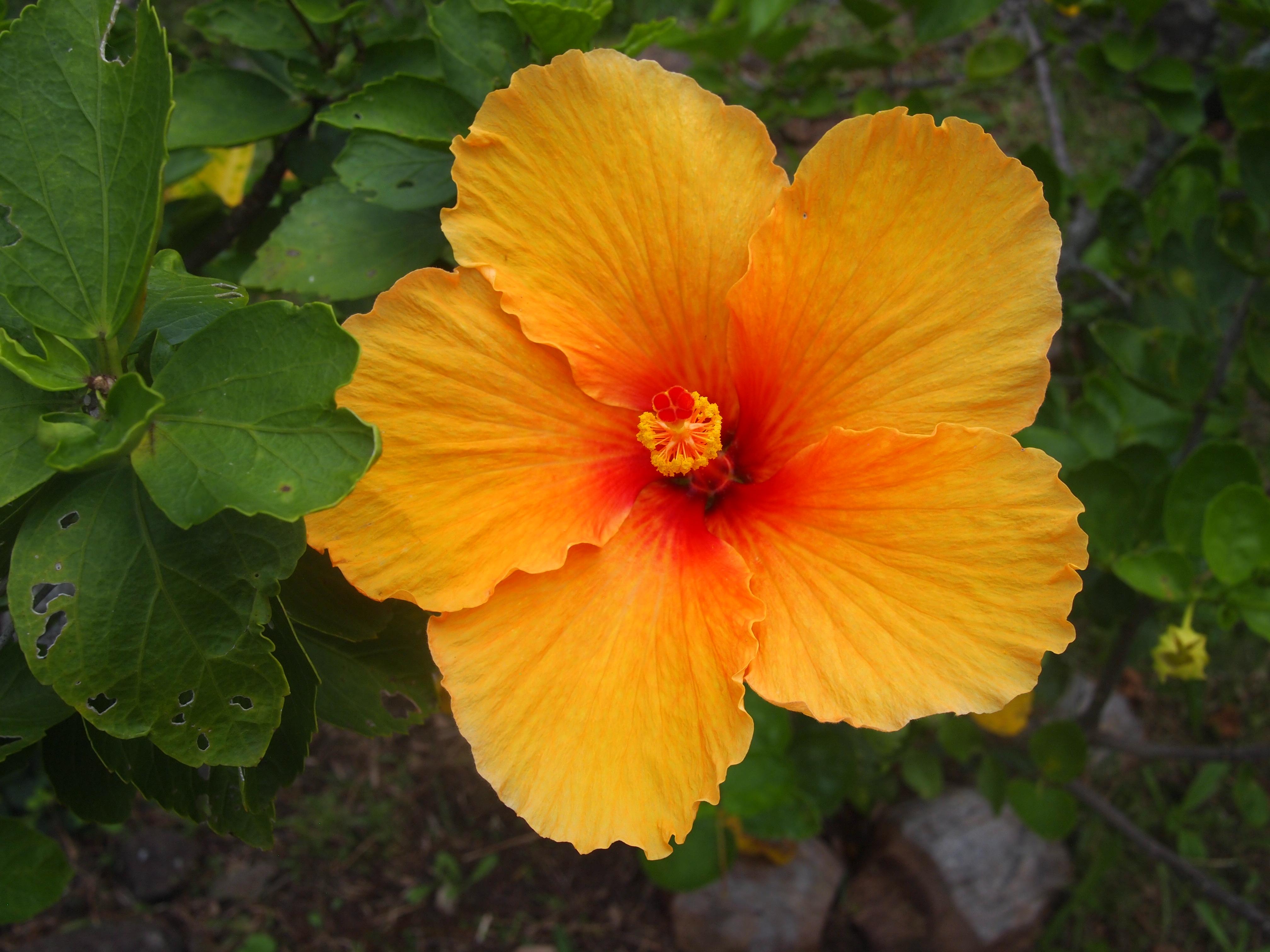 Wakacje na Hawajach - galeria zdjęć